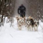 Chenil du chien-loup (3)